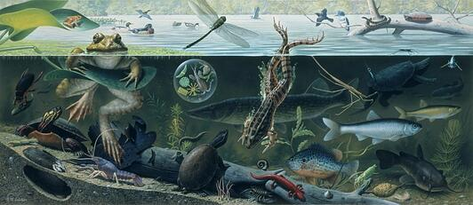 Ned M. Seidler - Freshwater Pond Life (1970s)